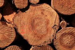Wall of stacked wood logs as background. A Wall of stacked wood logs as background royalty free stock photo