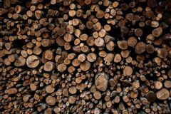 Wall of stacked wood logs as background royalty free stock photos