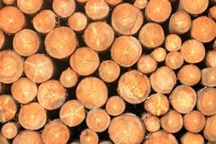 Wall of stacked wood logs as background. A Wall of stacked wood logs as background royalty free stock photography