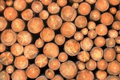 Wall of stacked wood logs as background. A Wall of stacked wood logs as background stock photo