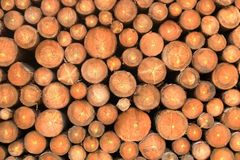 Wall of stacked wood logs as background. A Wall of stacked wood logs as background stock photos