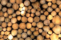 Wall of stacked wood logs as background. A Wall of stacked wood logs as background royalty free stock image