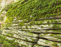 Wall stone labyrinth on the site of the fault after the earthquake. Sochi, the yew-boxwood grove Stock Photo