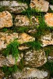 Wall of stones. With grass growing between them Stock Photography