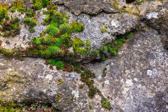 Wall of stones with moss Stock Photography