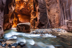 Wall street in the Narrows, Zion National Park, Utah. Beautiful landscape at Wall street in the Narrows, Zion National Park, Utah Stock Photos