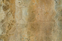 Wall texture Stock Image
