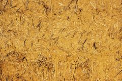 The wall texture of an adobe house made from barley straw and two kinds of clay. Royalty Free Stock Photos