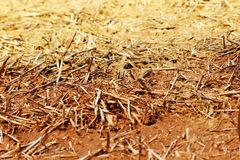 The wall texture of an adobe house made from barley straw and two kinds of clay. Stock Photography