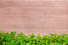 Wall texture and green leaf background Royalty Free Stock Images