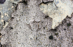 The wall texture with moss and cracked plaster and whitewash Royalty Free Stock Photo