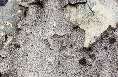The wall texture with moss and cracked plaster and whitewash Royalty Free Stock Photography