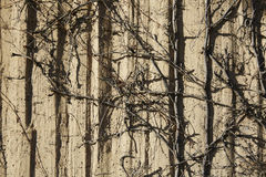 Wall textures and dried bushropes Stock Images