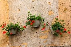 Wall and three pots of geranium plants Stock Photo