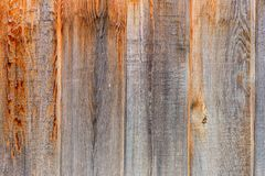 Wall tightly fitting unpainted boards with wood structure. Fence of vertical, tightly fitting unpainted boards with wood structure Royalty Free Stock Image