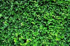Wall tree Stock Image