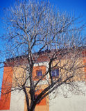 Wall, tree and a blue sky. Colored wall, tree and a blue sky Royalty Free Stock Photo