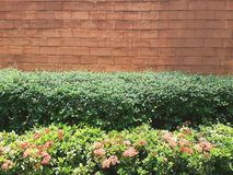 Wall. Trees flowers colors green brick, wall, floor, backdrop, vintage, grunge, house, retro, material, background, ancient, old, interior, aged, room, dirty Royalty Free Stock Photo