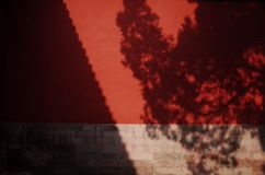 the shadow of the tree on the red wall royalty free stock photography