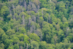 Wall of Trees Stock Image