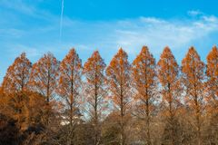 Wall of Trees. A wall of trees affording cover to the premises of Osaka Castle stock images