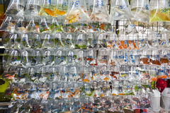 Wall of Tropical Fish for Sale. A wall full of hanging bags of tropical fish for sale on fish street in Hong Kong stock photos