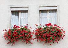 Wall with two windows decorated by flowerpots Royalty Free Stock Image