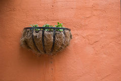 Wall växten Royaltyfria Foton