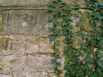 Wall, Vegetation, Stone Wall, Ivy Stock Photo