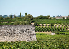 Wall in vineyard Royalty Free Stock Images