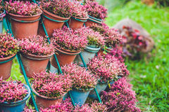 Wall of violet flowers in pots. Garden concept Royalty Free Stock Photo