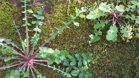 Wall of Weeds Stock Photos