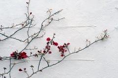 wall white arkivbilder