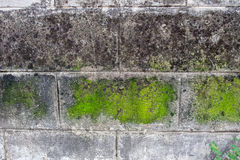 Wall white brick dirty lichen with green moss stain Royalty Free Stock Images