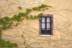 Wall and window. Twined an ivy Stock Photo