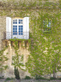 Wall with Window and Ivy, Arles France Stock Image