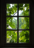The wall and window of an old farmhouse inside with grape leaves Royalty Free Stock Photo
