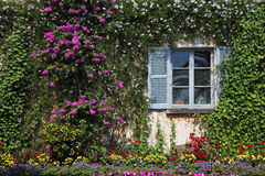 Wall and window, overgrown with flowers Stock Photos