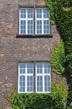 Wall with window wall covered by ivy Royalty Free Stock Image