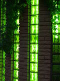 Wall and windows nightclub with vines. Modern nightclub of the brick, decorated with vines and green leaves of wild grapes royalty free stock photography