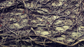 Wall Zen Texture. Branches abstract display over stone wall Stock Photo