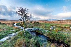 Walla bäck på Dartmoor Arkivbild