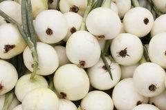 Walla Walla Sweet Onions. Closeup of fresh white walla walla sweet onion bulbs with green stems for sale at an outdoor farmers' market stock images