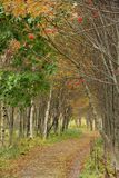 wallaby fotografia stock