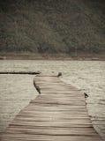 wallaby fotografia royalty free