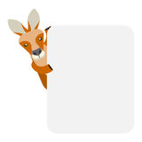 Wallaby banner. Illustration of a wallaby on a white background Royalty Free Stock Photos