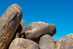 Wallaby de rocha, console magnético, Austrália Fotos de Stock