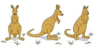 Wallaby figures in different positions. Different views of adult wallaby Stock Photo