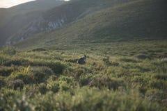 Wallaby outside ja zdjęcie stock