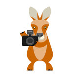 Wallaby photographer. Illustration of a wallaby on a white background Royalty Free Stock Images